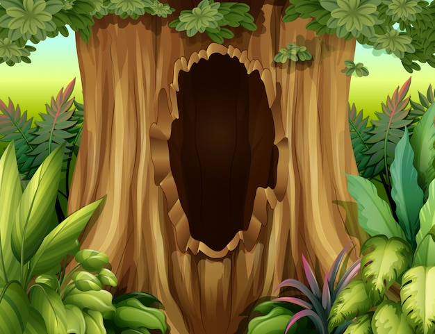 Un hoyo en un gran árbol