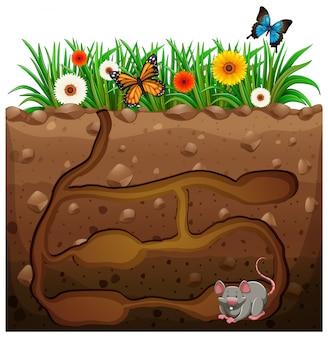Hoyo de rata debajo del jardín