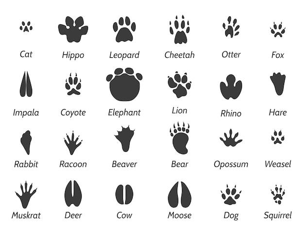 Huellas de animales de vida silvestre.