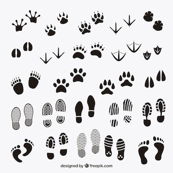 Huellas sombras de animales y humanos
