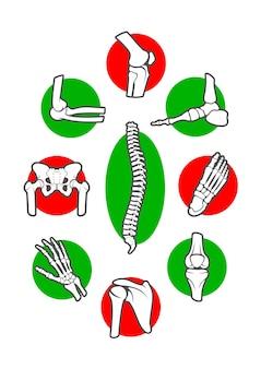 Huesos y articulaciones del esqueleto humano pierna mano pie rodilla brazo y columna vertebral dedo y codo pelvis y costilla hombro y tobillo muñeca y pecho cadera y columna vertebral
