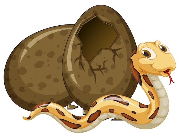 Huevo de incubación de serpiente marrón