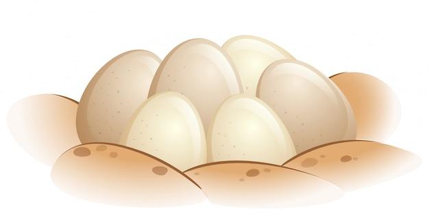 Huevos de tortuga en la arena