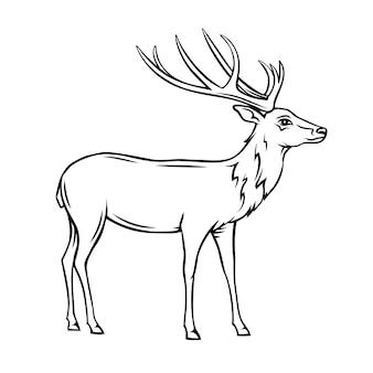 Icono de ciervo. insignia de contorno de reno salvaje. animal de zoológico.