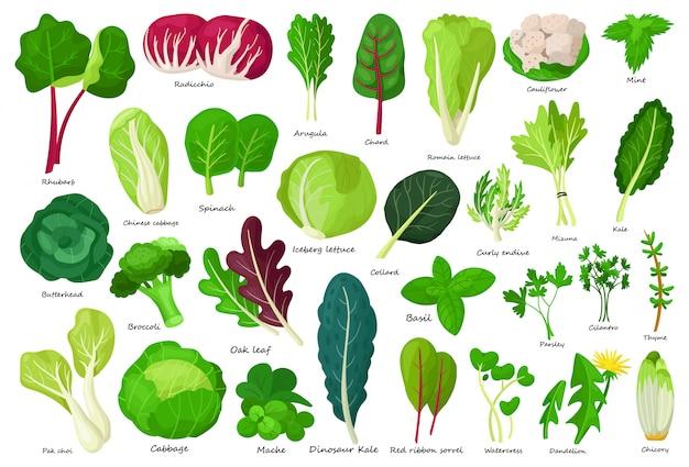 Icono de dibujos animados de lechuga vegetal