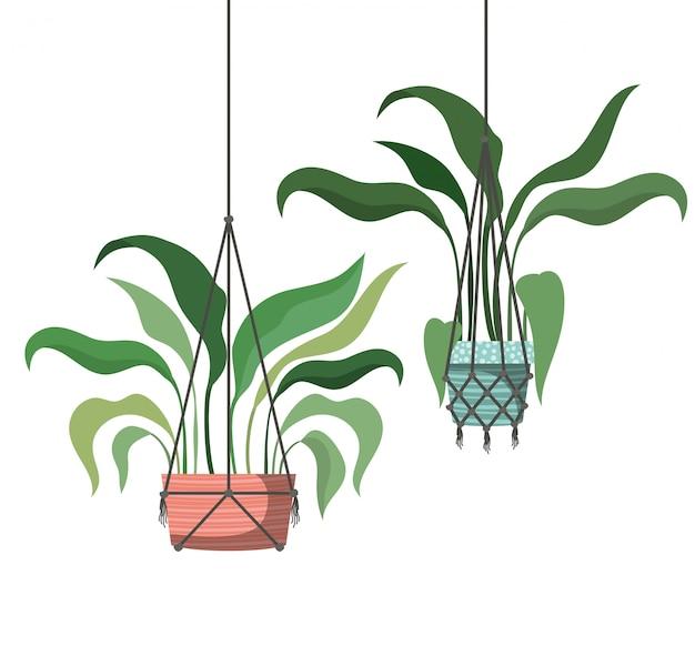 Icono de plantas de interior en perchas de macramé