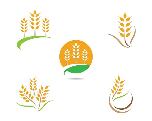 Icono de vector de trigo
