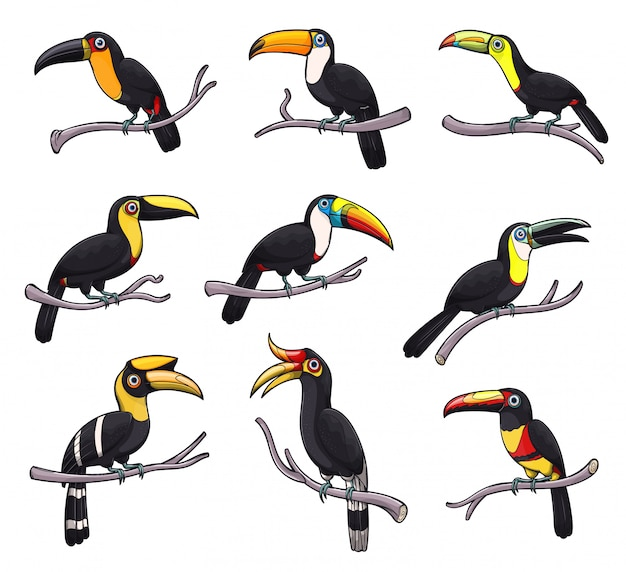 Iconos de aves tucán de animales tropicales exóticos