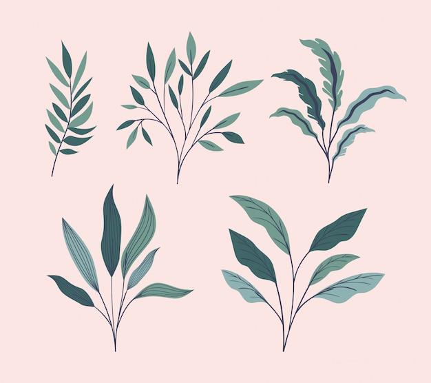 Iconos de conjunto natural de hojas verdes