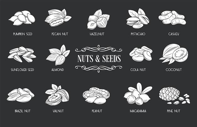 Iconos de glifo de nueces y semillas. blanco sobre negro ilustración nuez de cola, semilla de calabaza, maní y semillas de girasol.
