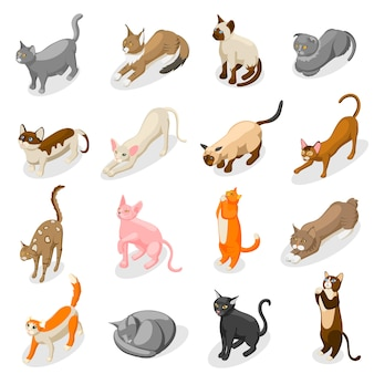 Iconos isométricos de gatos de raza pura
