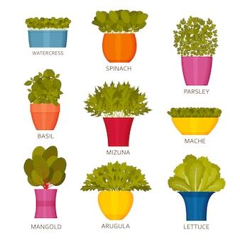 Iconos de jardinería interior con lechuga. ilustración.