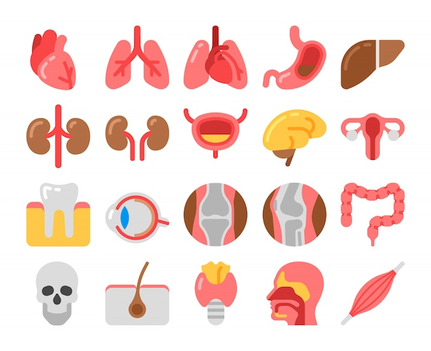 Iconos médicos de estilo plano con órganos humanos