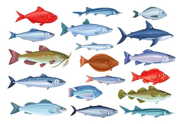 Iconos de peces. mariscos de besugo, caballa, atún o esterlet, bagre, bacalao y fletán.