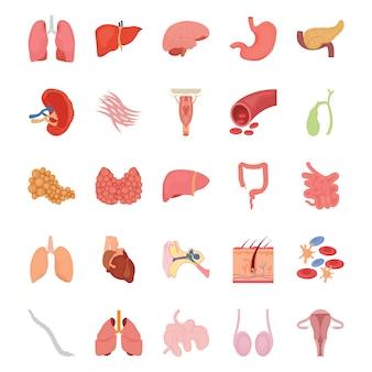 Iconos planos de órganos humanos internos