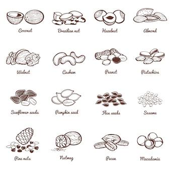 Iconos de vector de nueces y semillas comestibles. conjunto de alimentos saludables en proteínas.