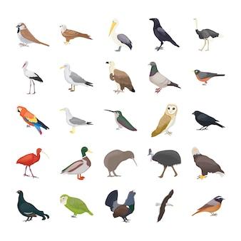 Iconos de vector plano de aves