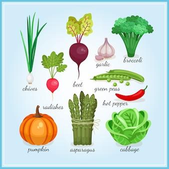 Iconos de verduras frescas saludables con nombres que incluyen cebolletas, rábano, ajo, brócoli, calabaza, espárragos e ilustraciones de vectores de colores de col