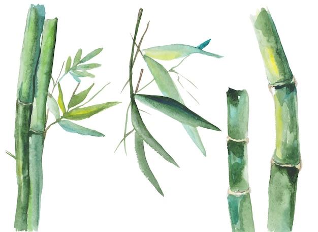 Ilustración acuarela de bambú
