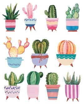 Ilustración acuarela dibujada a mano con cactus y suculentas plantas de interior de acuarela sobre fondo blanco