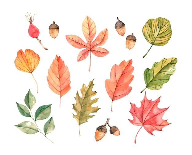 Ilustración acuarela dibujada a mano. conjunto de hojas de otoño.