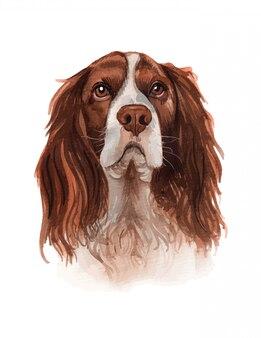 Ilustración acuarela de una ilustración de raza de perro popular