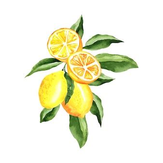 Ilustración acuarela de limones