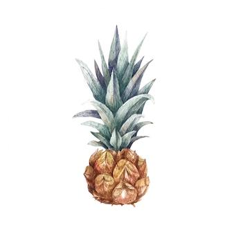 Ilustración acuarela de piña madura fresca. fruta dibujada a mano para su diseño aislado en blanco