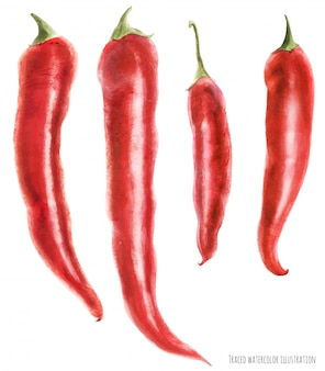 Ilustración acuarela trazada de chiles