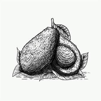 Ilustración de aguacate con estilo de grabado.