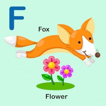 Ilustración aislada del alfabeto animal letra f-fox-flor