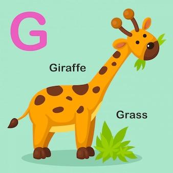 Ilustración aislada del alfabeto animal letra g-grass, jirafa