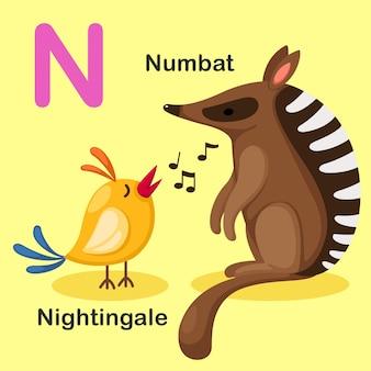 Ilustración aislada del alfabeto animal letra n-numbat, ruiseñor