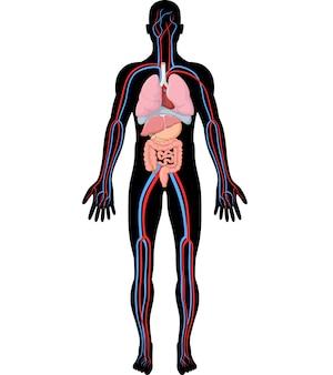 Ilustración de la anatomía del cuerpo humano
