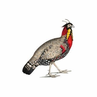 Ilustración animal de la vendimia