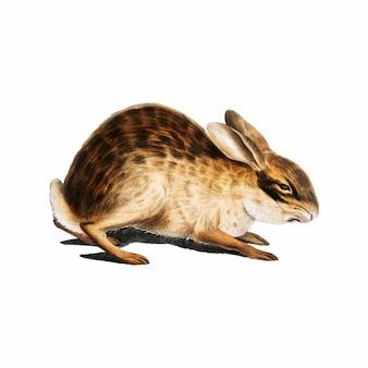 Ilustración de animal vintage