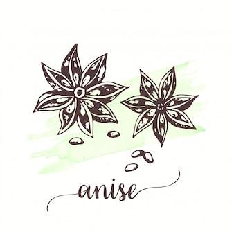 Ilustración de anís vector para embalaje