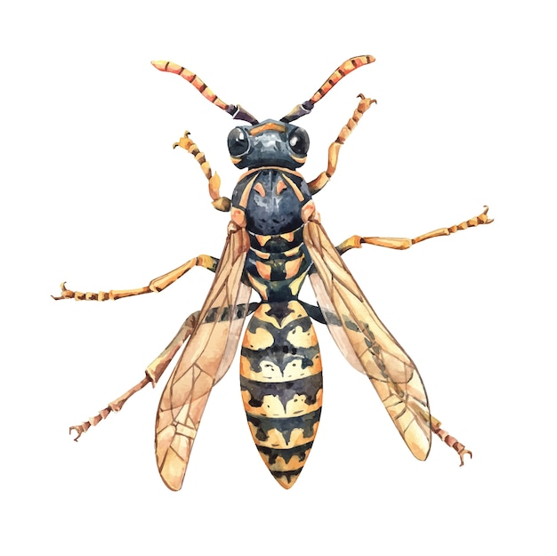 Ilustración de avispa asiática avispa acuarela