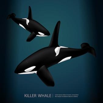 Ilustración de ballena asesina bajo el mar