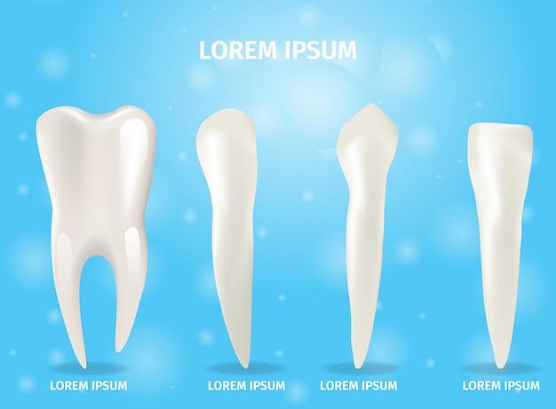 Ilustración de banner realista cuatro tipos de dientes