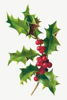 Ilustración de baya de navidad vintage