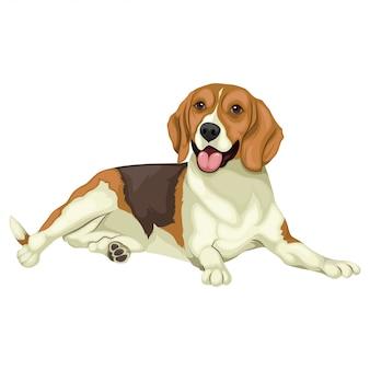 Ilustración beagle