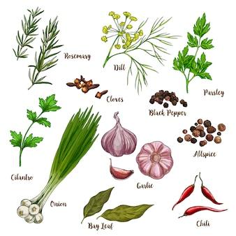 Ilustración de boceto realista a todo color de hierbas y especias culinarias