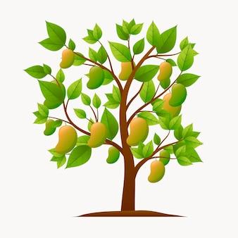 Ilustración botánica del árbol de mango
