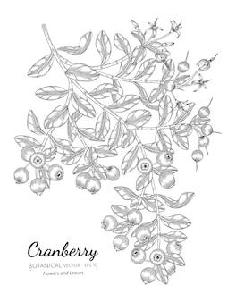 Ilustración botánica dibujada a mano de fruta de arándano con arte lineal sobre fondos blancos.