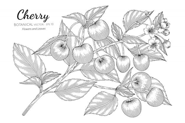 Ilustración botánica dibujada a mano de fruta de cereza con arte lineal en blanco