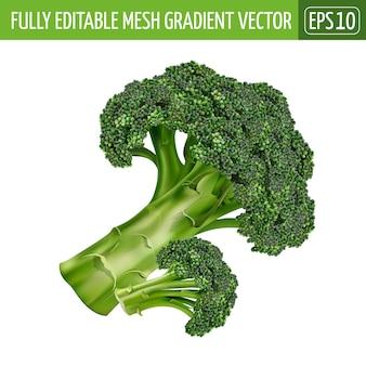 Ilustración de brócoli en blanco