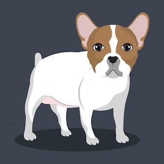 Ilustración de bulldog de pie