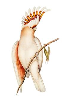 Ilustración de cacatúa