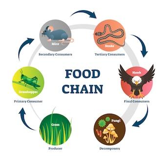 Ilustración de la cadena alimentaria